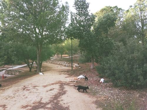 Nicosia Cyprus Athalassa Park Cats